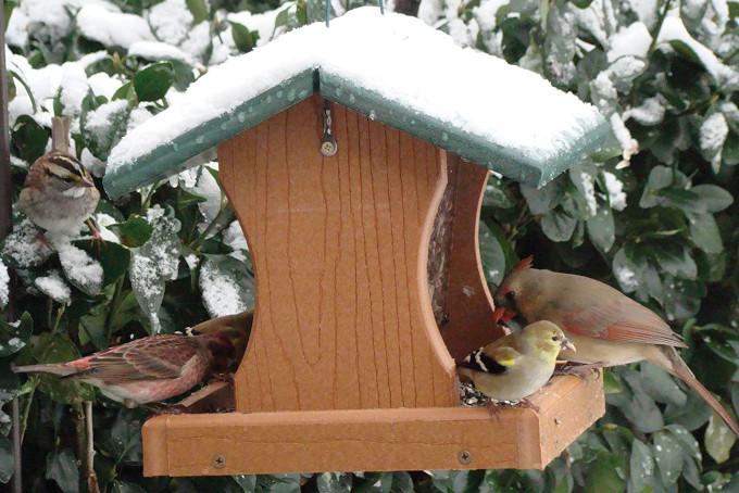TTAototech per uccelli selvatici da giardino Mangiatoia per uccelli selvatici 24 x 8 x 8 cm